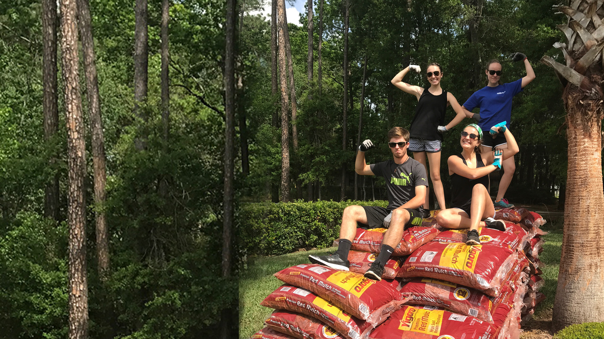 Mulch 4 Missions